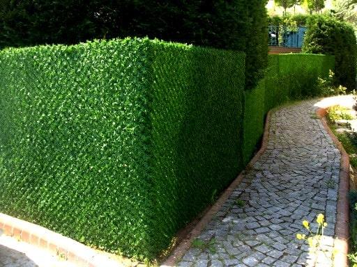 Зелёный забор в Киеве